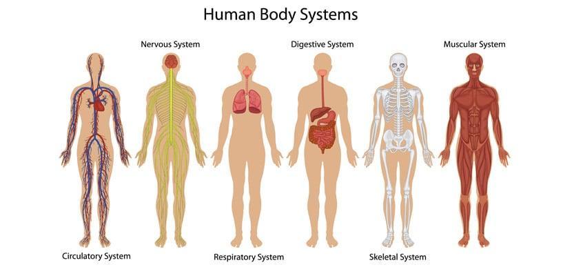 regenesis healing body and soul